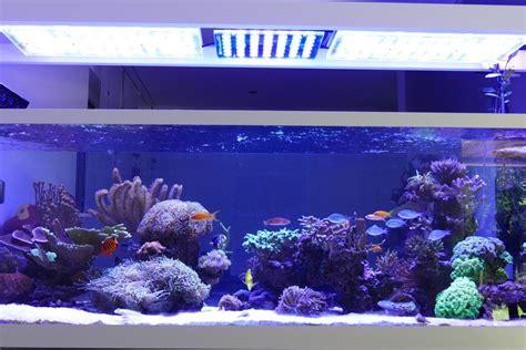 marine aquarium led lights 840 liter reef aquarium from switzerland orphek