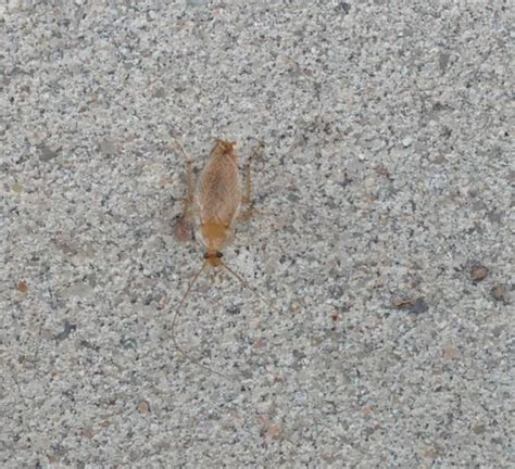 kakerlaken im garten hilfe garten voller schaben seite 1 natur tiere
