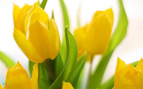 spring flowers pictures wallpapers spring flowers background