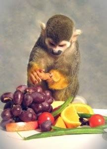 Color Blind Cure Gene Therapy Gene Therapy Cures Color Blindness In Monkeys