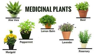 Herbal & Medicinal Plants and their Uses   Acegardener