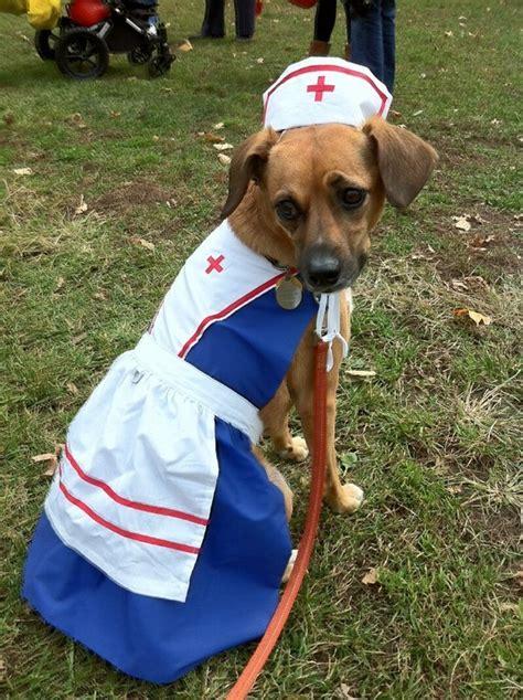 nurse harness dress hat costume  dogs