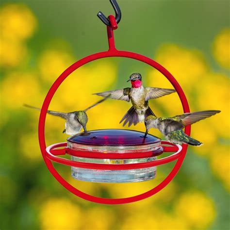 what do i put in my hummingbird feeder 28 images