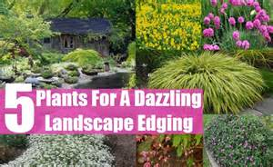 Annual Flowers That Like Full Sun - top 5 plants for a dazzling landscape edging diy home