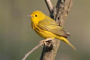 las aves mas hermosas del mundo en hd nuevas im 225 genes taringa