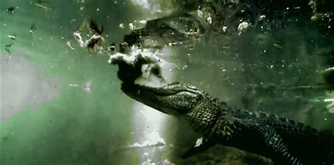 best everglades airboat tours reviews private airboat tour everglades
