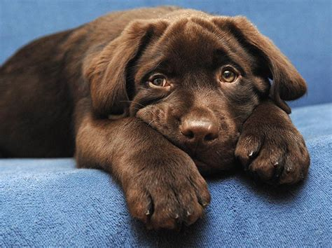 great puppy names names 240 puppy naming ideas