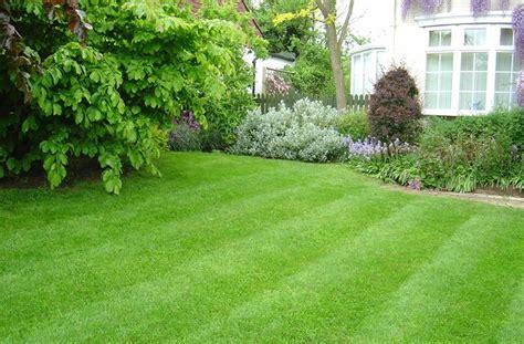semi erba giardino erba per giardino prato curare il prato