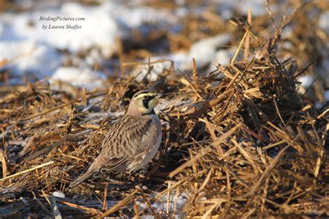 top 28 do birds eat snow how do birds find enough to