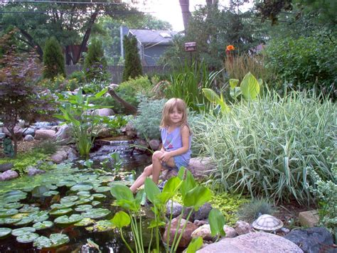 is a backyard pond an ecosystem 100 is a backyard pond an ecosystem fish u0026 koi