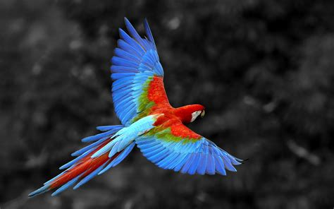 colorful parrots hd wallpapers free beautiful parrot colorful parrot