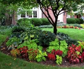 landscaping around trees plants ideas interesting design