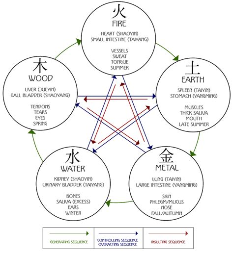 five major organs tcm world the 5 element diagram of cycles organs associations