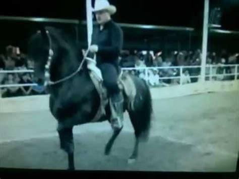caballo y muchacho el 0060884258 caballo el muchacho alegre segundo lugar expogan hermosillo 2011 youtube