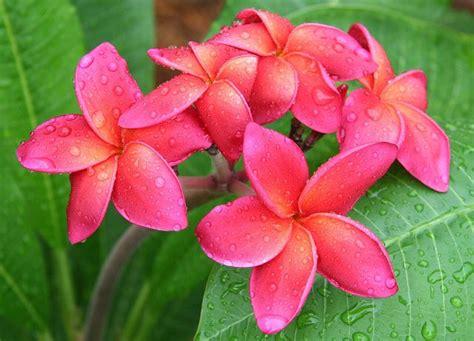 tatuaggi fiori tropicali oltre 1000 idee su tatuaggi con fiori esotici su