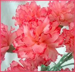 Carnations crafty little beanut crepe paper carnations