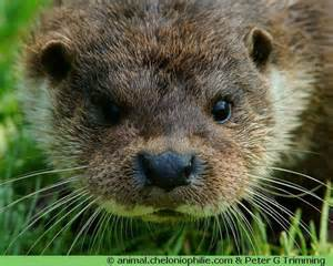 les photos de la loutre