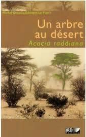 construyendo un influencer edition books un arbre au d 233 sert influence d acacia raddiana sur la