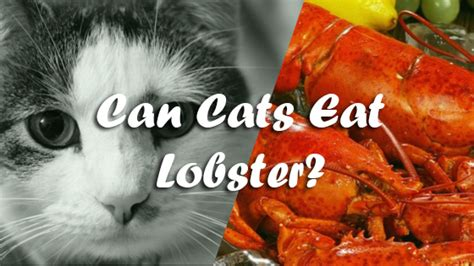 can dogs eat lobster can cats lobster pet consider