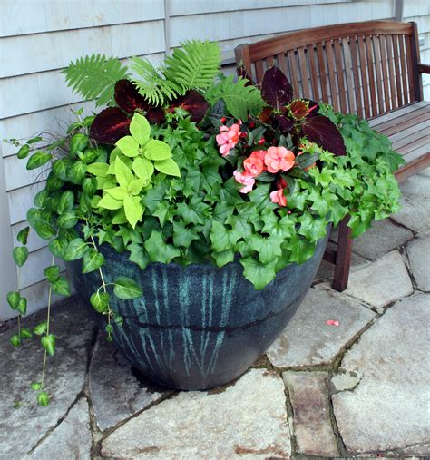 containers gardening calendar of events and classes coastal maine botanical