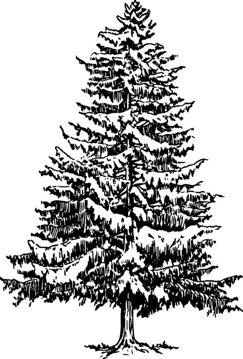 christmas tree 18 in stencil how to draw a tree free printable tree stencils 10 pics how to draw in 1