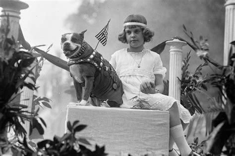 Sergeant Stubby Pictures Put Your Paws Up For History S 4 Most Heroic Dogs New York Post
