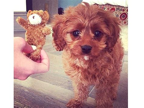 katy perry puppy katy perry instagram photo of butters
