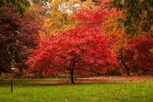 le jardin reste beau en automne l avenir