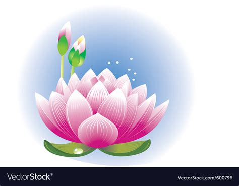 stock images royalty free images vectors lotus flower royalty free vector image vectorstock
