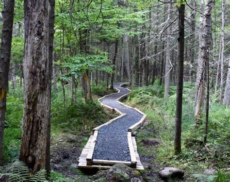 adirondack wild questions bike trail work  wilcox lake