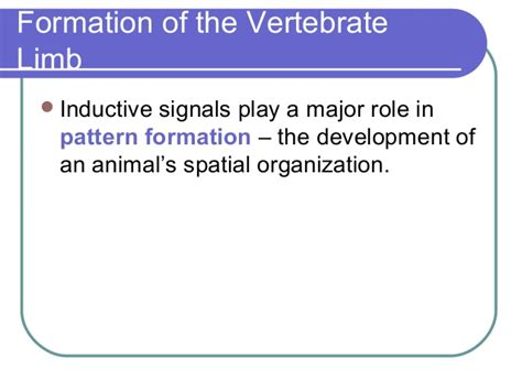 pattern formation vertebrates processes on animal development