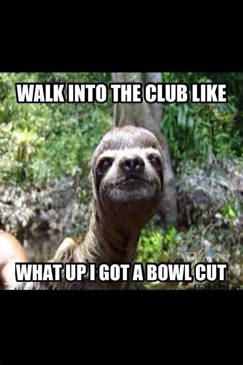 Rape Sloth Meme Generator - 126 best images about sloth memes on pinterest