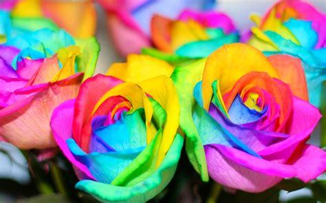 imagenes de flores multicolores violetas rosa arco iris rainbow roses