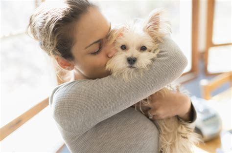 dogs don t like hugs stanley coren explains why dogs hugs and how they