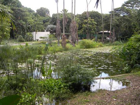 imagenes de jardines en venezuela jardn botnico de caracas venezuela tuya