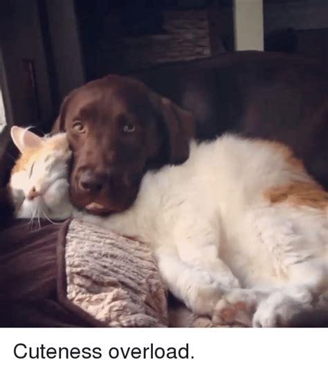 Cuteness Overload Meme - 25 best memes about cuteness overload cuteness overload