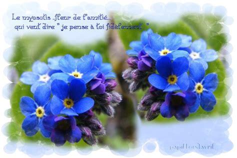 Fleur De L Amitié by Fleurs De L Amiti 233
