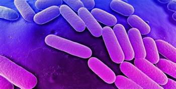 Diseases Caused By Microorganisms In Plants - pneumonia bacterial