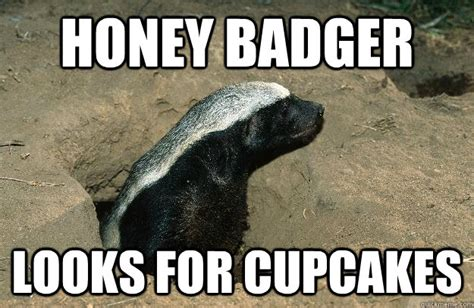 Honey Meme - honey badger meme memes