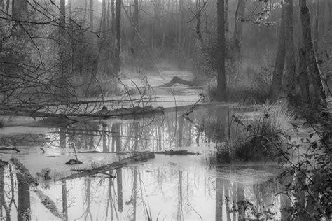 imagenes invierno blanco y negro fotos gratis paisaje 225 rbol agua naturaleza bosque