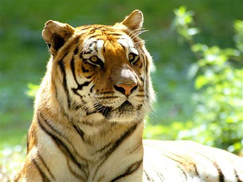 fotos animales tigres pajaros solo animales