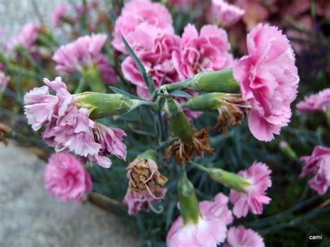 Garten Pflanzen Richtig Schneiden by Pflanzen Richtig Schneiden Fotos Garten