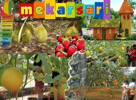 Bibit Buah Di Mekarsari wisata outdoor seru di taman buah mekarsari outbound lembang bandung sky adventure indonesia