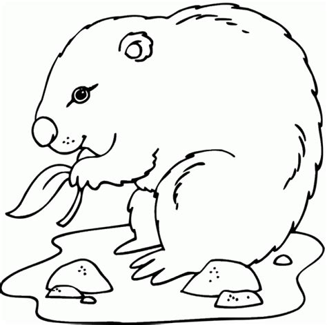 groundhog coloring pages groundhog color sheet coloring home