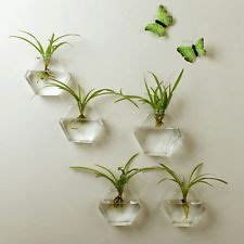 Wall Mounted Vases Uk by Wall Vases For Flowers Uk Ktrdecor