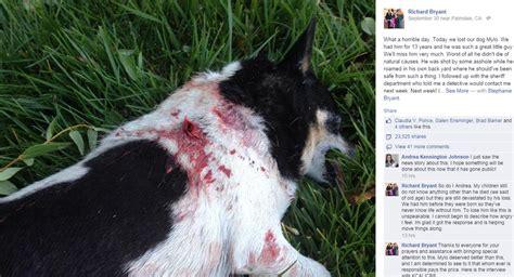 lancaster puppy sheriff s officials bitten not in lancaster backyard