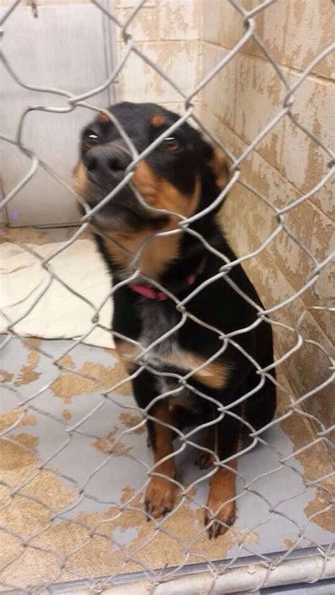 68 best images about rottweilers us lost registry on
