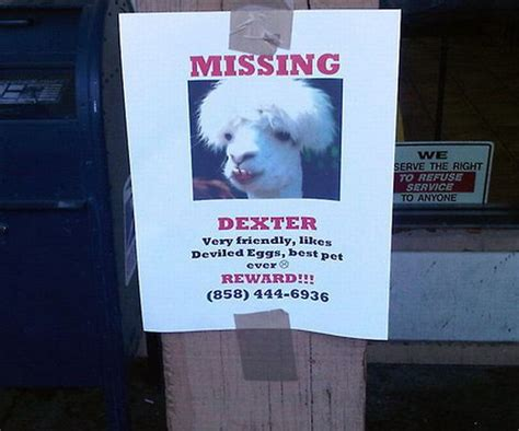 Lost Dog Meme - 30 funniest lost and found pet signs damn cool pictures