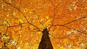 nature trees leaves color yellow autumn fall seasons