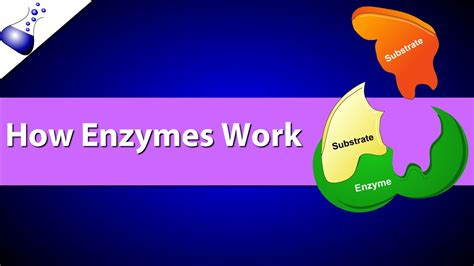 how work how enzymes work